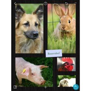 Sachunterricht, Tiere am Bauernhof mit PicCollage